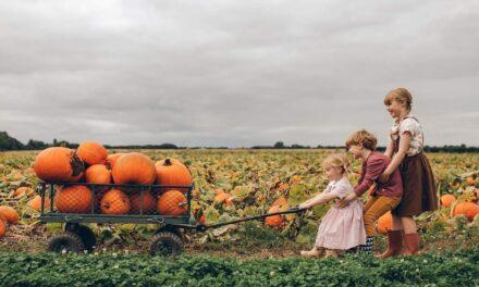 Wskocz w kalosze, złap jedną z taczek i odkryj farmę Beverley Pumpkin Patch!